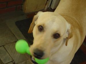 cute-dog-file000900856477