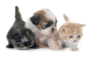 Pets - Dogs and Cats